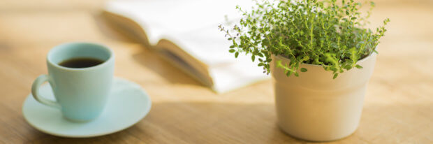Best Plants to Have in Your Home for Good Indoor Air Quality
